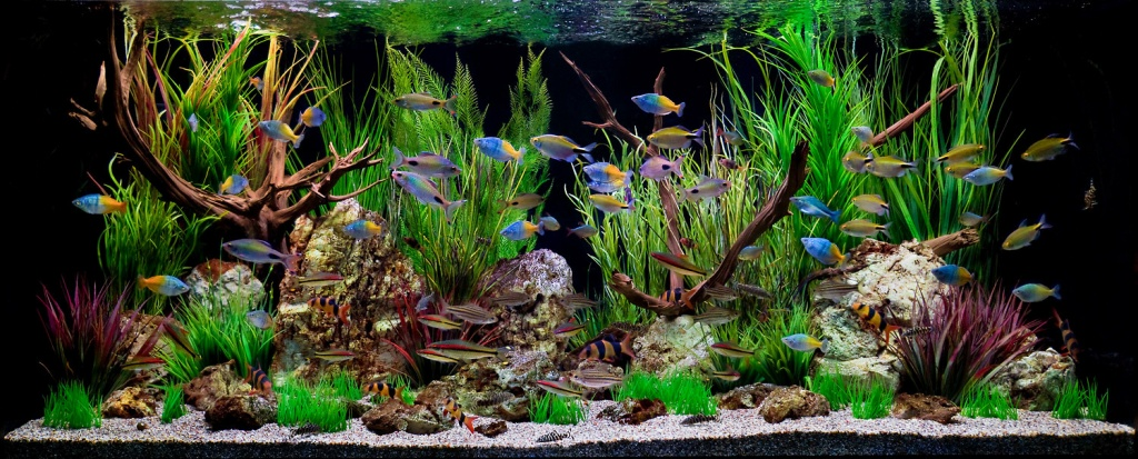 62_1aquarium_tropicalfish_fishtank.jpg